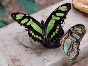 Iridescence in butterfly wings.